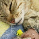 Anestesia a Clínica Veterinària Marina