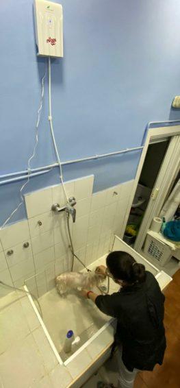 Des d'aquesta setmana hem incorporat l'ozonoteràpia en els banys i tractaments al nostre servei de perruqueria de forma que tots el nostres peluts s'en puguin beneficiar.