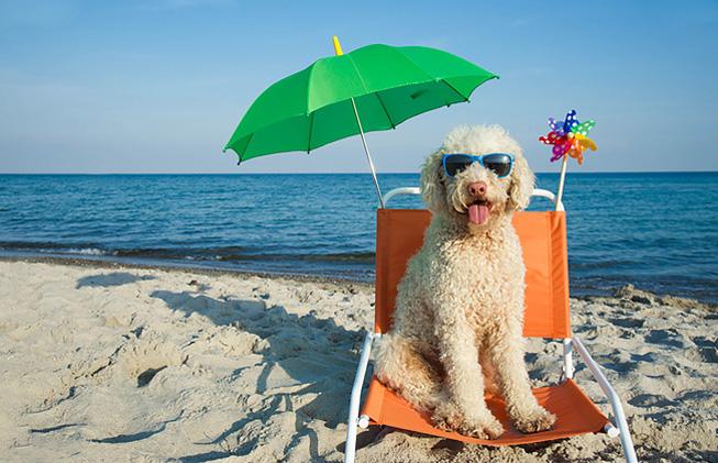 ac6e2-playas-en-espagna-que-adminten-perros